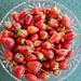strawberries by tessa m
