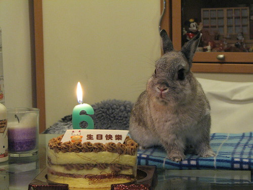 Polo's 6th birthday
