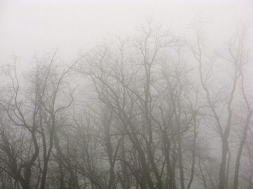 trees cloud tree fog cloudy foggy intricate
