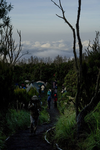 Morning At Machame Camp | by madpickles