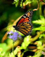 10 13 07 Dallas Arboretum 227