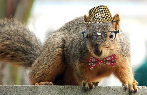 Squirrels with glasses - photo#3