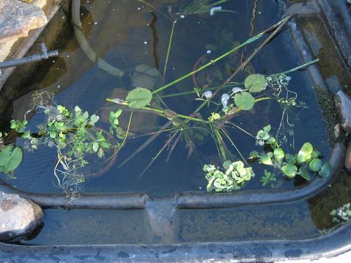 Ver tema construccion estanque de obra for Estanques tortugas prefabricados