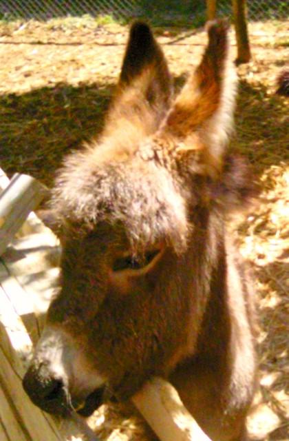 Baby donkey at Limestone Heritage in Malta