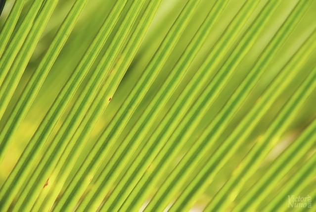 Verde es la esperanza