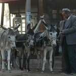 Kashgar Animal Market: Three Donkeys - China