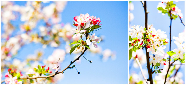 spring, color, beauty, flower