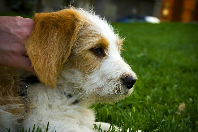 Basset Hound Mixed Breeds 2 A Gallery On Flickr