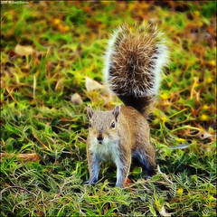 Electric squirrel . .