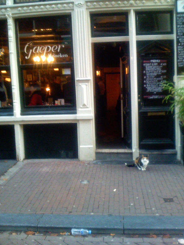 Cat in front of a bar