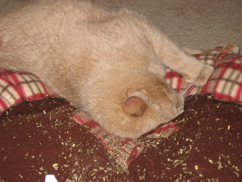 cat bed + catnip = success