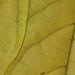 Gettin leafy with it by ArtByChrysti