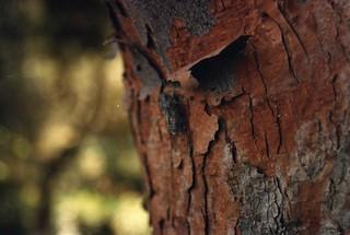 Cricket on a tree