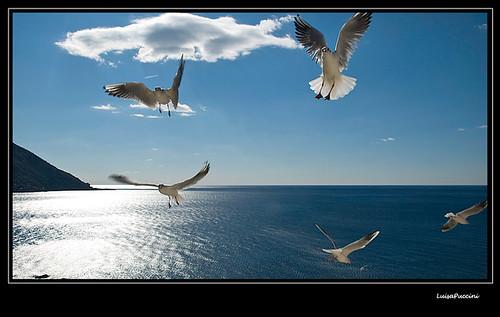 blue sea sky italy sun seagulls mediterraneo liguria camogli mywinners nikond80