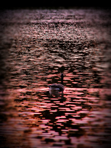 pink light sunset lake color reflection water swim evening nc alone peace purple northcarolina raleigh calm goose lynn ripples vignette tranquil chrysti lakelynn