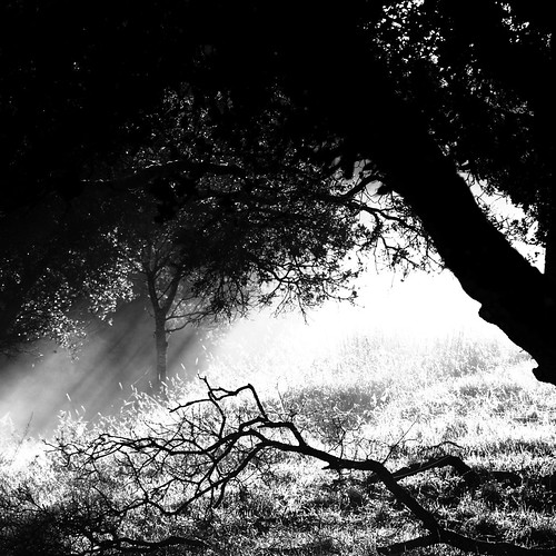 trees shadow blackandwhite bw mist fog square bayarea rays filtered abigfave platinumphoto justbeggingtobeacdcover