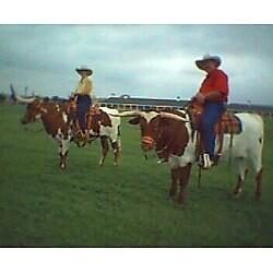 cowboys cowboy texas longhorn steer horsebackriding