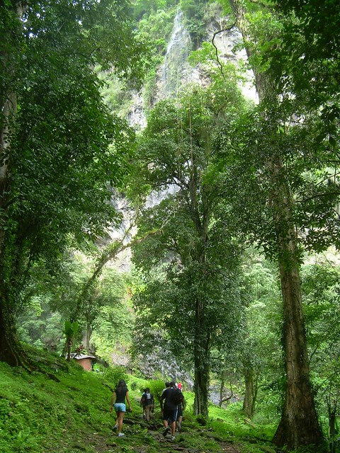 Maracas Waterfall – Trinidad and Tobago   Tripomatic  Trinidad And Tobago Maracas Falls