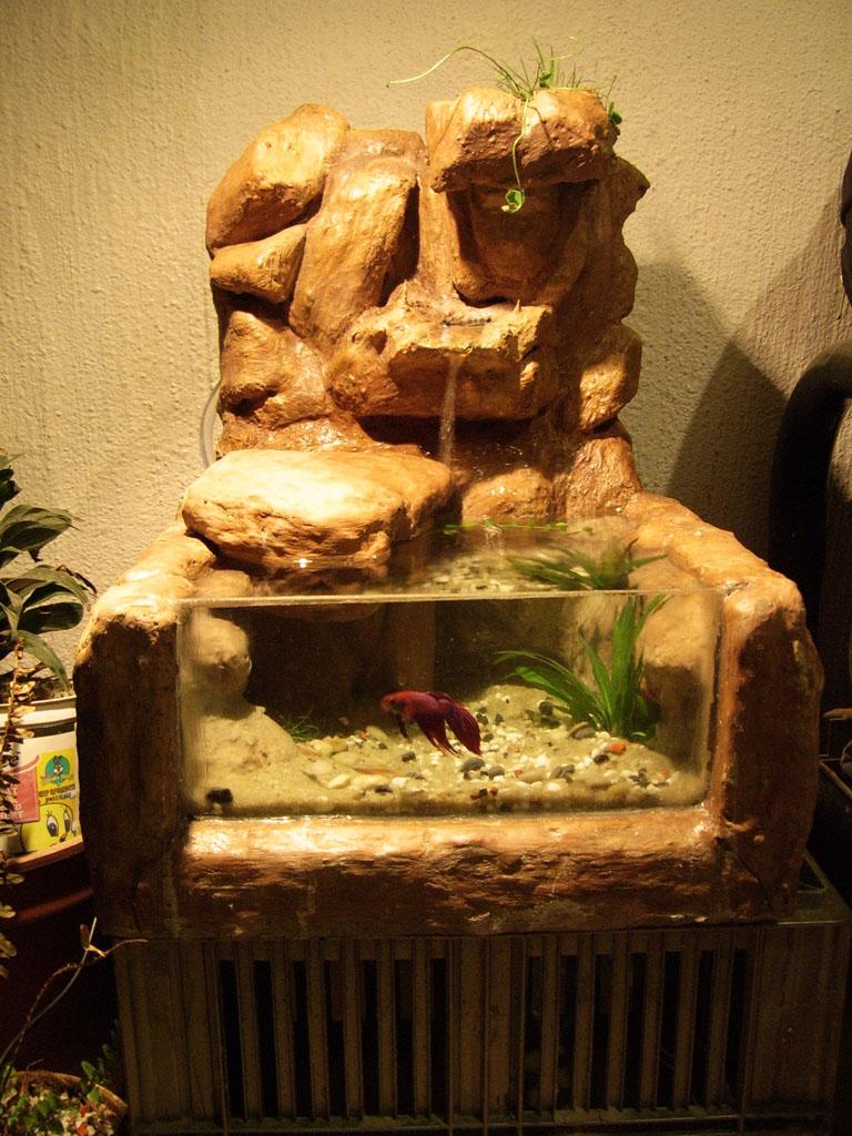Awsome betta aquarium for Awesome betta fish tanks