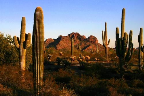 arizona cactus mountains landscape evening desert geocoded suguaros