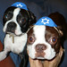 Shecky & Reuben! (in Yamikas!)
