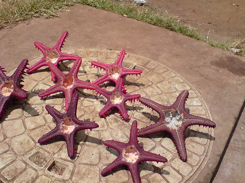 Starfish flashers