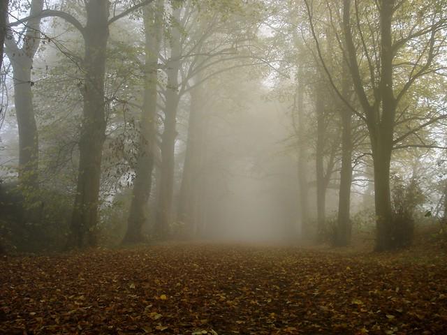 Misty autumn morning, Oxfordshire - Flickr CC wheatfields