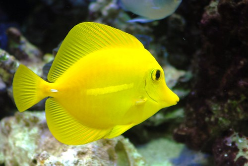 Dave 39 s 5x2x2 for Tang saltwater fish