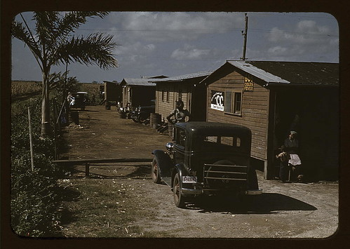 Houses which have been condemned by the Board of Health, but are still occupied by Negro Migratory workers, Belle Glade, Fla. (LOC)