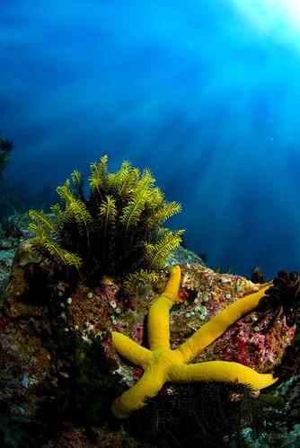 indonesia nikon starfish fisheye scubadiving aceh fins nikkor105mm muw ikelite pulauweh d80 malaysianunderwatercom chronoid underwatershootcom nikonflickraward nikonflickrawardgol