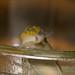 Small photo of Slug