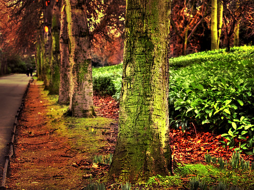 park travel trees ireland light dublin green nature bravo olympus hdr irlanda autunm ststephensgreen photomatix magicdonkey 25faves atrium09 ltytrx5 colorphotoaward megashot rubenseabra thegardenofzen