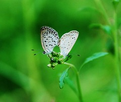 Insect/Bird 昆蟲/鳥類