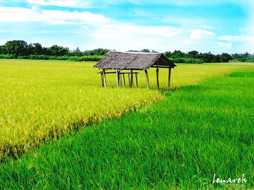 rice farm hut ricefield bicol norte nipahut blueribbonwinner daet camarines camarinesnorte abigfave superaplus aplusphoto artlegacy lenareh pkchallenge spiritofphotography aphotocontest35