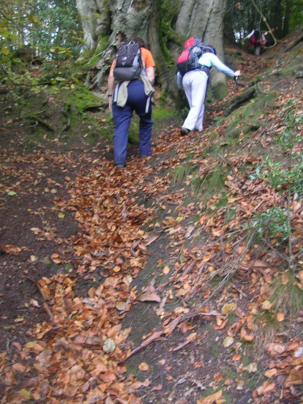 Ascending Leith Hill The difficult east face. Holmwood to Gomshall