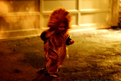 escaped lion!    MG 5783