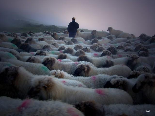 Perdidos en la niebla
