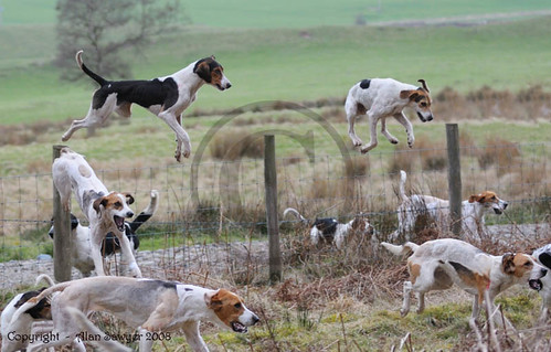1411 141 Lazonby Hound Trailing