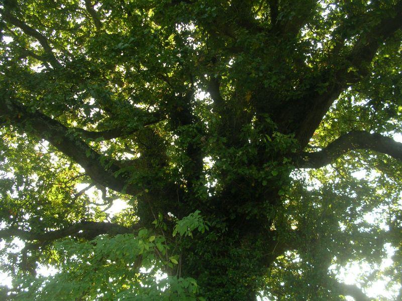Oak Stonegate circular