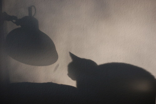 The cat and the lamp