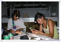 20041018_Guana@BVI_Bat  Netting_005_A