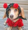 festive dog