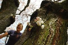 NYPD  Cherry Bud Tree Climber Seattle UW
