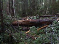 Blocked Trail!