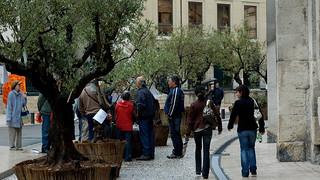 Image of Arènes de Nimes near Nîmes. olive nimes olivier gard méditerranée arenes olivette oliveraie chambredemétiers oléiculture