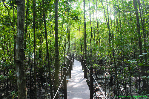 nature forest mangrove walkway malaysia pulau johor kukup