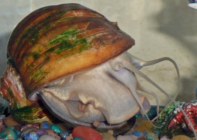 Pet Snail Flickr Photo Sharing