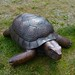 Tortoise, 2010 by GreenhillNC