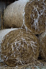 agriculture, straw, hay,