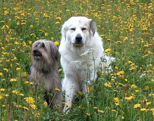 Meine Hunde 1487